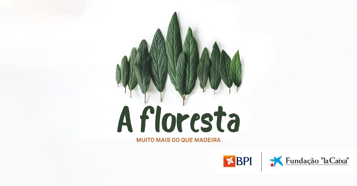 """Exposição """"A Floresta"""" da Fundação """"la Caixa"""" e do BPI recebe mais de 27.000 visitantes em Braga   Banco BPI"""