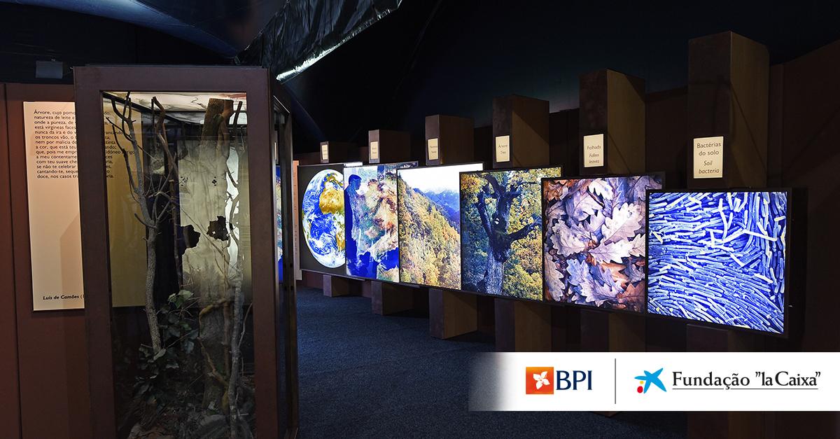 A exposição ''A Floresta'' inaugura em Castelo Branco.